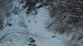 Winter river. winter landscape. Winter river. landscape Pine forest stock video footage