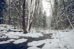 Winter by the river. With steep banks, calm flow and snowy forest Stock Photos