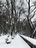 Winter in Riverside Park in Manhattan Morningside after snow storm. Black and white, high contrast image of bare trees, benches, stone wall covered in thick Royalty Free Stock Photo