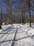 Winter Road. Forest road under snow in winter sunny morning with clear blue sky in background Stock Images