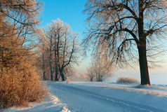 Winter road. To one of parks of Saint-Petersburg Royalty Free Stock Photos