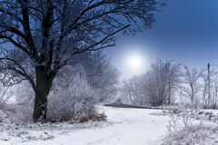 Winter road. Winter landscapes, snow-covered trees Stock Photos