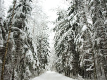 Winter road. Road in snowy forest in Estonia Stock Photography