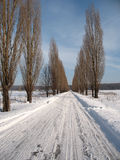 Winter road. Country winter road leading into a winter forest Stock Image