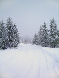 Winter Road. Road through stand of pine trees covered in snow in the winter Stock Images
