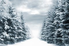 Free Winter Road Stock Image - 1609971