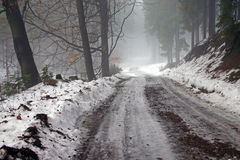 Winter road. In the forest royalty free stock image