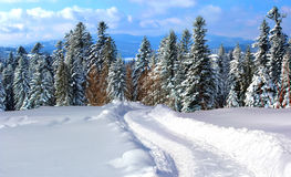 Winter road. Snow-covered mountain road, disappearing into the woods Stock Photography