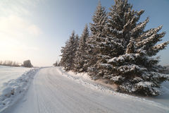 Winter road. Royalty Free Stock Image