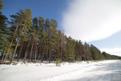 Winter road. Royalty Free Stock Photos
