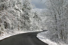 Winter road. Of black with white trees Royalty Free Stock Image