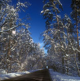 Winter road. Royalty Free Stock Photo