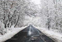 Winter Road. Snowy road through the winter forrest Stock Images
