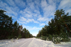 Winter road. Stock Images