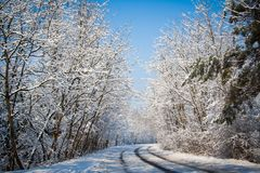 Winter Road. Winter trees on snow in hazy park with long white road Stock Image