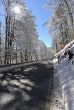 Winter road. A clean winter road with a sunny sun behind a frozen tree and the snow  all around Royalty Free Stock Photography