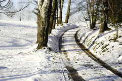 Winter road. Winter view - road thought trees Stock Image
