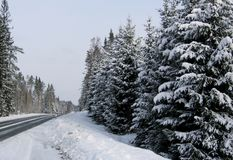 Winter road. A winter road in Sweden with snowed fir trees along it Royalty Free Stock Images