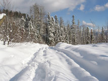 Winter road. In pine forest. Caucasus, Russia Royalty Free Stock Photography