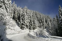 Winter road. With frozen tree Royalty Free Stock Photography