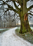 Winter road. Snowed road under and old oak tree Stock Images