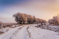 Winter road along trees in sunset light. Winter road along trees covered with hoarfrost in sunset light stock photos
