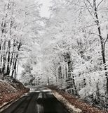 Winter road. Black road in the white forest Royalty Free Stock Image