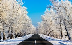 Winter road on a bright day royalty free stock image