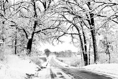 Winter Road with Canopy of Snowy Trees stock images