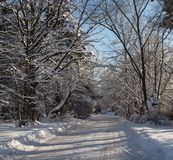 Winter road cleared of snow among the trees on a clear sunny day Royalty Free Stock Photos