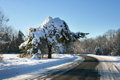 Winter road in countryside Stock Images