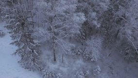Winter Road Covered with Snow. Aerial view of a snowy forest with high pines and road with a car in the winter. Top view of winter road, trees and bushes covered stock footage