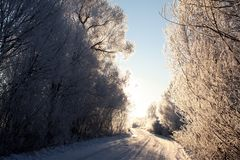 Winter road in the early morning stock image