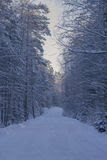 Winter road. Winter is expensive winter Russia Royalty Free Stock Photography