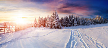 The winter road. Fantastic Pine tree forest. the winter road. Carpathian Ukraine Europe