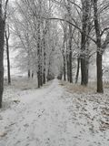 Winter road. Fascinating nature of Chernigov. The transition of autumn winter Royalty Free Stock Images