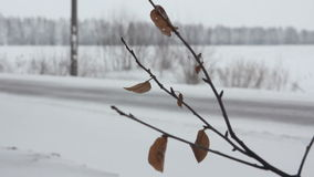 Winter road in the field stock footage