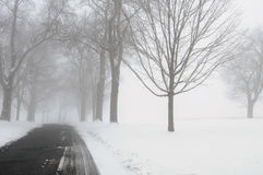 Winter Road with Fog. Country in the winter with fog and trees in the background Stock Images