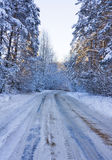 Winter road, a forest Stock Photography