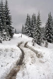 Winter road in the forest Royalty Free Stock Photos
