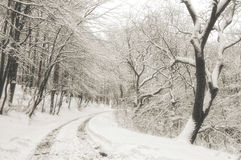 Winter road in the forest. A road trough the forest in winter with snow Stock Photo