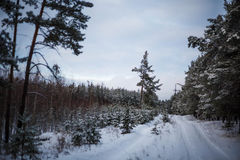 Winter road. In the forest Royalty Free Stock Photos