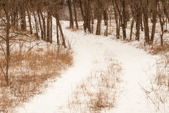Winter road in forest Stock Photography