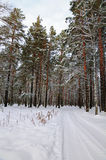 Winter road. Road in winter forest covered with snow Royalty Free Stock Images
