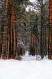 Winter road. Road in winter forest covered with snow Royalty Free Stock Photos