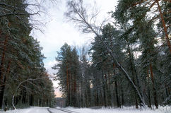 Winter road. Road in winter forest covered with snow Stock Photos