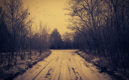 Winter road in the forest. Road covered winter snow in the forest Royalty Free Stock Photography
