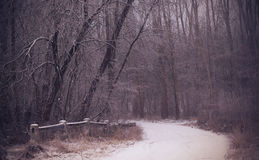 Winter road in the forest. Road covered winter snow in the forest Royalty Free Stock Photos
