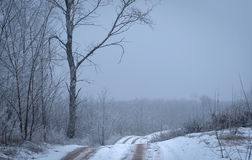 Winter road in the forest. Road covered winter snow in the forest Stock Images