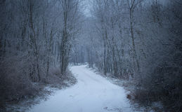 Winter road in the forest. Road covered winter snow in the forest Royalty Free Stock Photo
